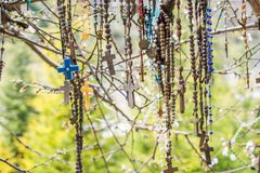 Branch of a tree full of rosaries stock photography