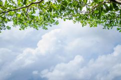 Branch tree Green Leaf and Clouds Blue Sky Background. Frame Royalty Free Stock Photos