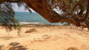 The branch of a tree growing near the sea stock video footage