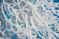 Branch of a tree in hoarfrost Stock Photo