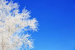 Branch of a tree in hoarfrost on background blue sky royalty free stock photography