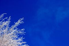 Branch of a tree in a hoarfrost on blue sky royalty free stock image