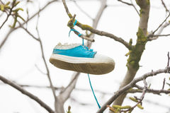 On branch of a tree hung a shoe Royalty Free Stock Photography