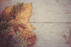 The branch of tree and leaves on a wooden surface Royalty Free Stock Images