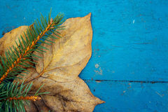 The branch of tree and leaves on a wooden surface Stock Photos