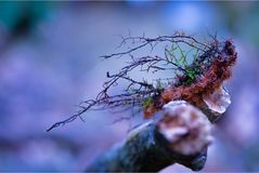 Branch, Tree, Macro Photography, Close Up Stock Photography