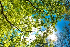 Branch, Tree, Nature, Leaf royalty free stock photos