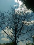 Branch on tree no leaves. Clear sky Stock Image