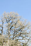 Branch tree over blue sky, pattern, close up. Stock Images
