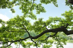 Branch of tree Royalty Free Stock Photography