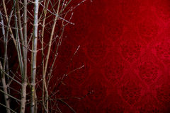 Branch of a tree on a red background with a pattern. Royalty Free Stock Image