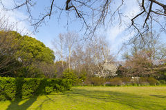 Branch of tree in sky and green lawn Stock Photography