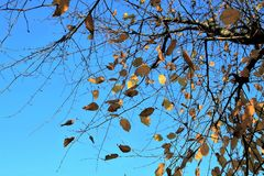 Branch, Tree, Sky, Leaf Royalty Free Stock Photography
