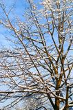 Branch, Tree, Sky, Twig Royalty Free Stock Photo
