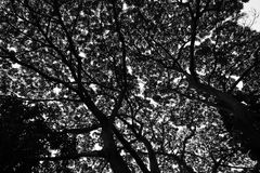 Branch Tree Structure Stock Photography