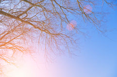 A branch of a tree at sunset Stock Images