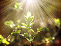 Branch tree under the sun Stock Image