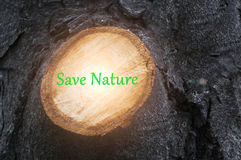 Branch of a tree was cut down by axe. Save nature. Branch of a tree was cut down by axe. Save nature Stock Image