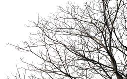 Branch of tree on white Stock Photos