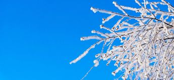 Branch of tree with white snow and brilliant hoarfrost Stock Photography