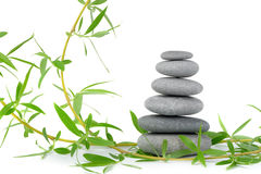 Branch of a tree of a willow and pebble. It is isolated on a white background stock images
