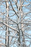 Branch, Tree, Woody Plant, Winter Royalty Free Stock Photo