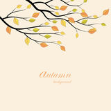 Branch tree with yellow leaves. Autumn vector illustration on a beige background Stock Illustration