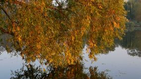 Lake branch autumn. Branch of trees on autumn time on lake stock video footage