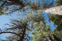 Branch trees and blue sky in elevation view. 1 Stock Photos