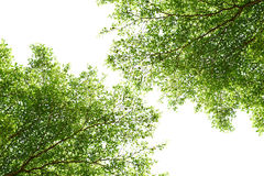 Branch of trees Royalty Free Stock Photos