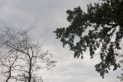 Branch of trees with leaves and without on the background with grey-blue sky. Summer contrast. Opposites.  stock image