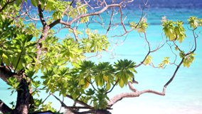 Branch of a tropical tree. Against the ocean shined with the sun stock video