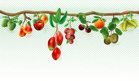 Branch with tropicals fruits Stock Photography