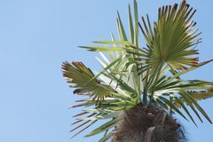 A branch and trunk of a palm tree against a blue sky on a clear sunny day stock photography