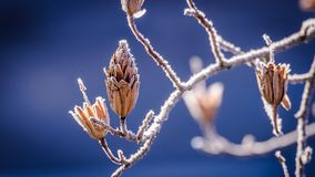 Branch, Twig, Close Up, Macro Photography Stock Photo