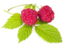 Branch of two ripe raspberries Stock Image