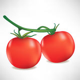 Branch of two tomatoes Stock Photography