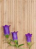 Branch of ultramarine colored bellflowers on beige bamboo napkin Royalty Free Stock Photography