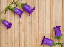 Branch of ultramarine colored bellflowers on beige bamboo napkin. Copyspace Royalty Free Stock Images
