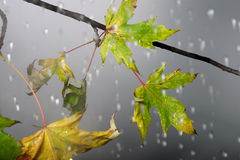 Branch under autumnal rain Royalty Free Stock Photos