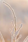 Branch under heavy snow Stock Image