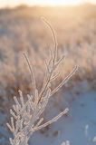 Branch under heavy snow Royalty Free Stock Photography