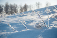 Branch under heavy snow. Urals Royalty Free Stock Images
