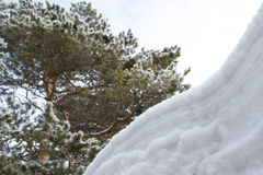 Branch under snow Royalty Free Stock Photo