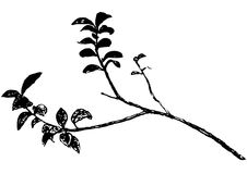 Branch (vector) Royalty Free Stock Image