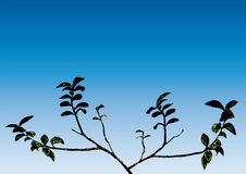 Branch (vector) Royalty Free Stock Images
