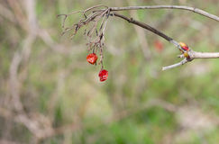 Branch of viburnum with dried fruits royalty free stock photo