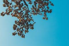 Branch. Vintage on blue sky Stock Photos