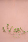 Branch on the wall Royalty Free Stock Photo