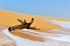 Branch is washed by waves on a tropical beach Stock Photo